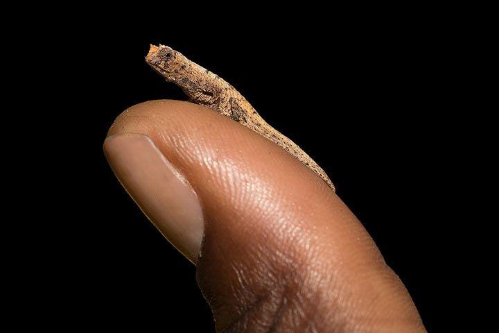 kleinste schlange der welt