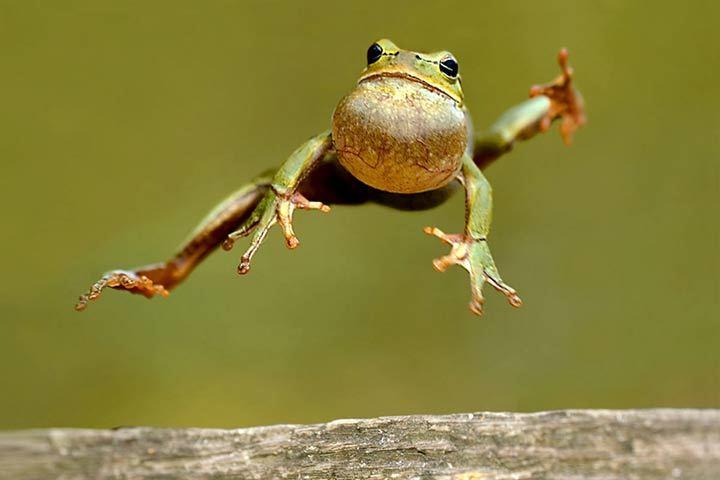 Kröte oder Frosch - Wo ist der Unterschied?