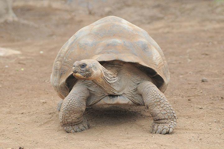 älteste Tier Der Welt