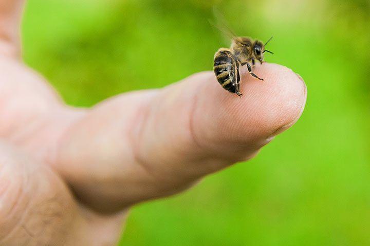 Stechen Bienen