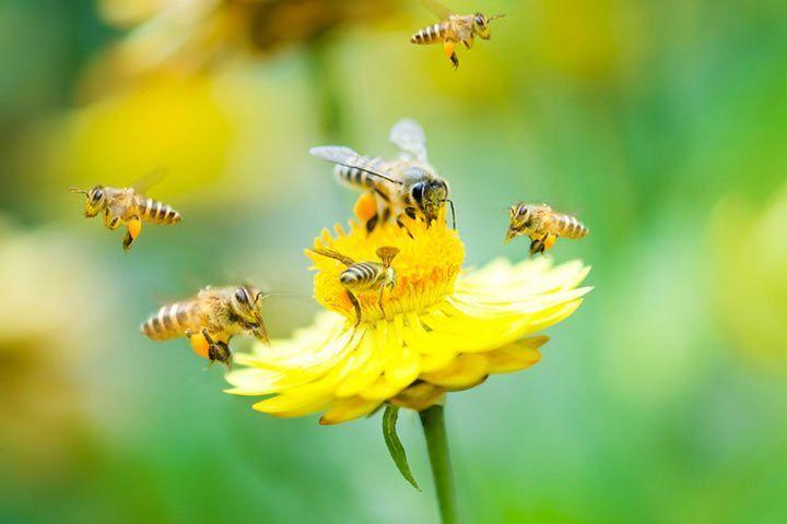 Bienenfeinde