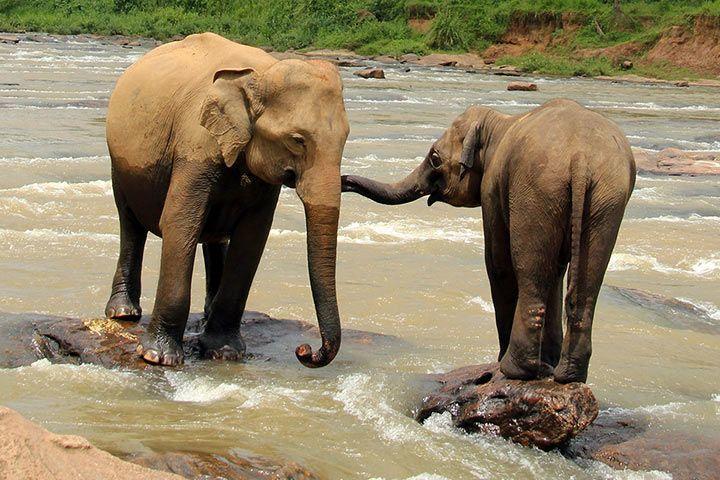 Haben Weibliche Elefanten Stoßzähne