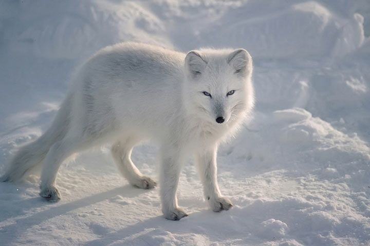Tiere Die Im Eis Leben