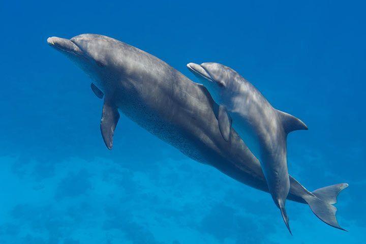 delfine steckbrief