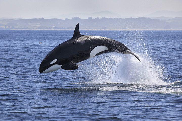 Besonderheiten Orca