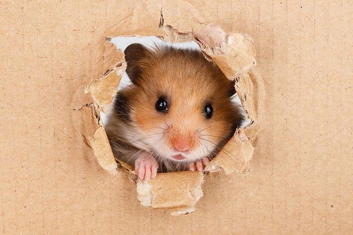 hamster_karton_l.jpg