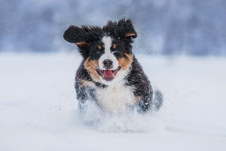 Hund Sabbert Viel