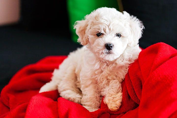 Liste hunde für allergiker Hunde für