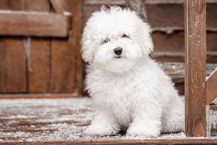 Liste hunde für allergiker Hunderassen für