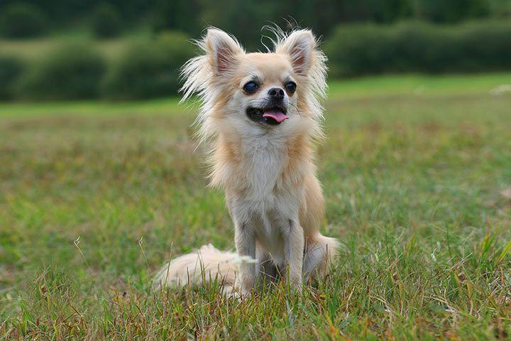 Hundemode Für Kleine Hunde