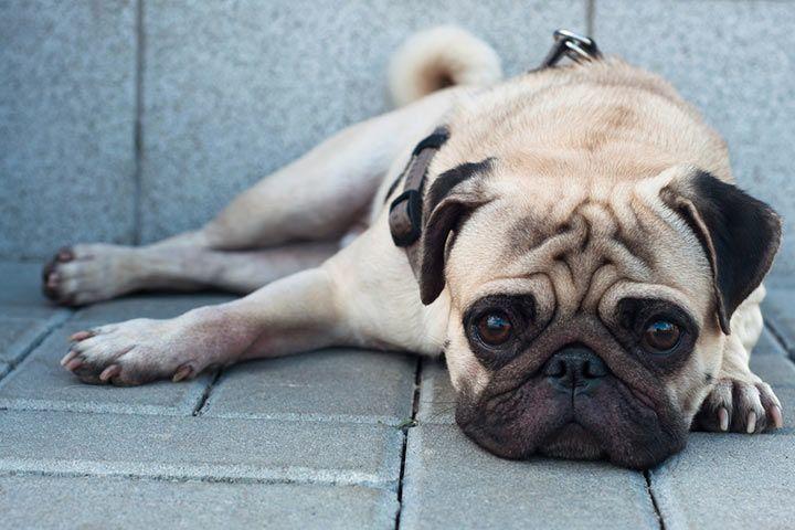 Watch Dogs  Gross
