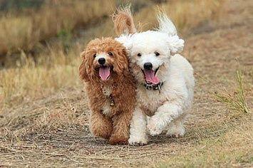 Hunde Die Wenig Haaren
