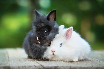 Die 16 Beliebtesten Kaninchenrassen Fur Kinder