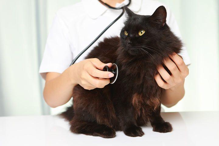 Haustier Katze Kosten Fur Einen Tierarzt
