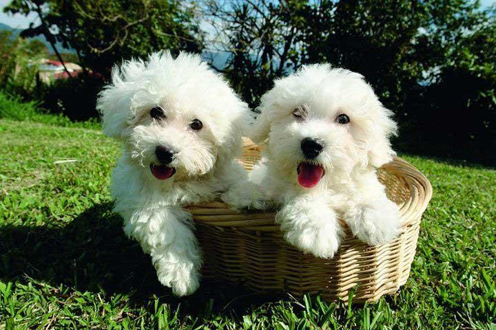Tiernamen Fur Duos