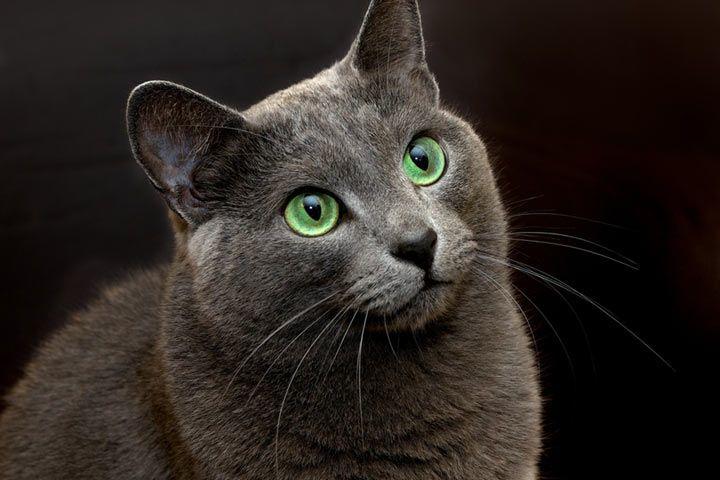 Katzennamen L