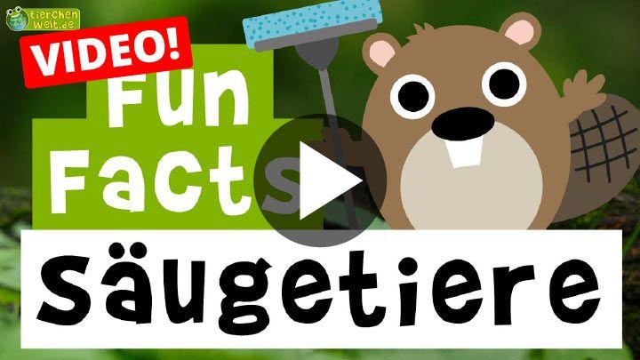 Video Fun Facts über Säugetiere