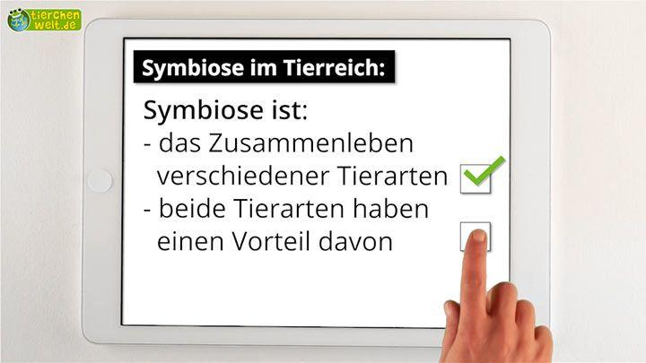 Symbiose im Tierreich - Check!